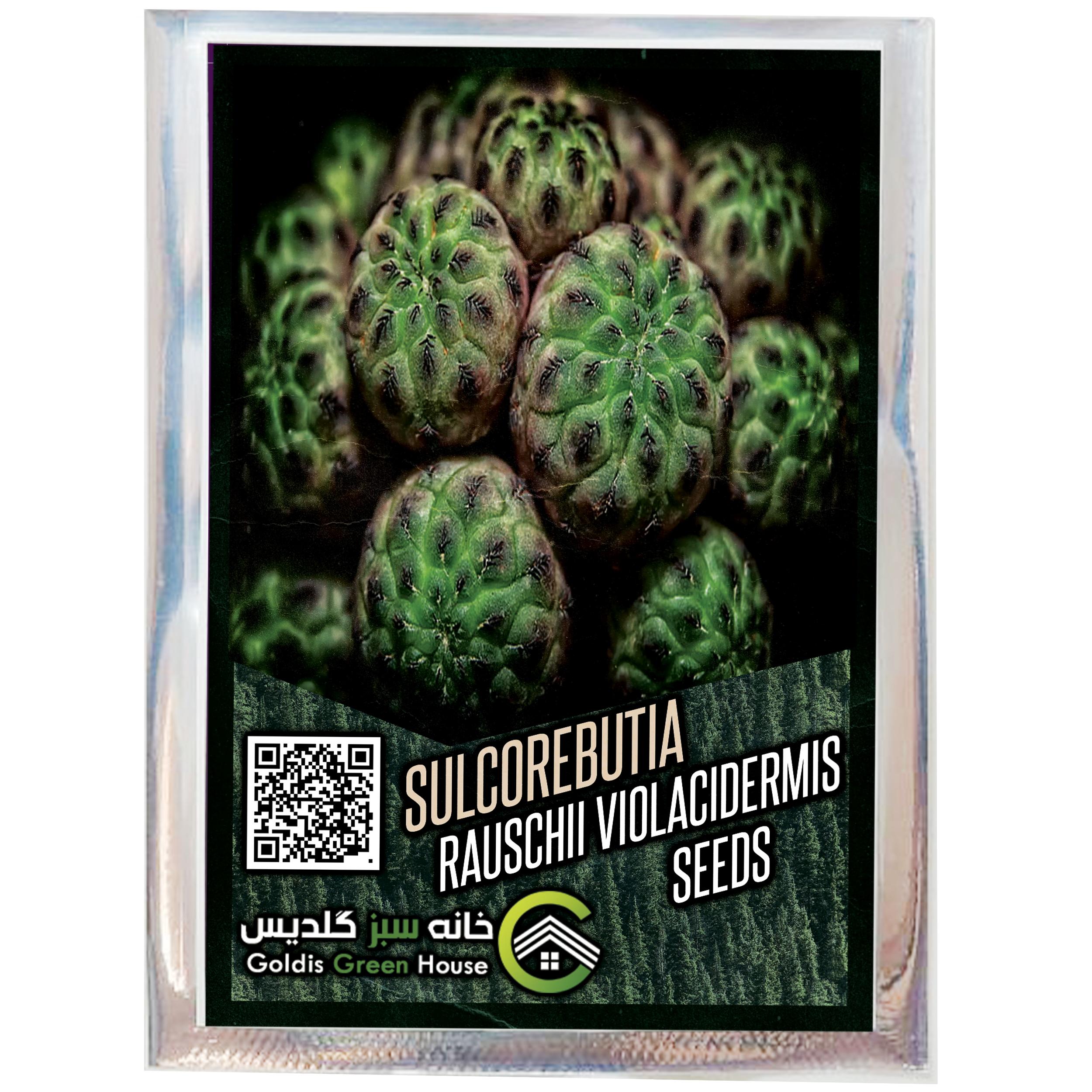 بذر کاکتوس سولکوربونیا راوچی خانه سبز گلدیس کد 37