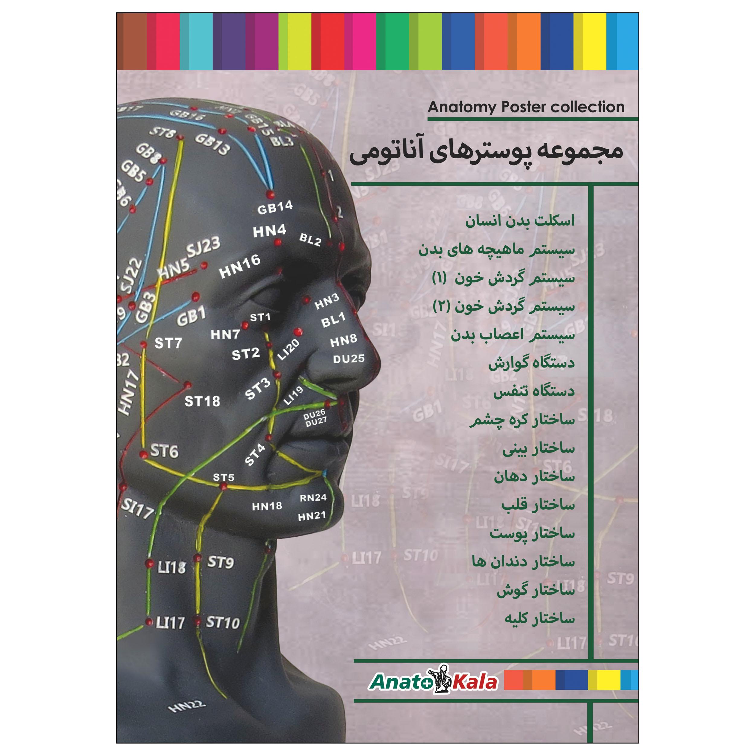پوستر آموزشی طرح پوستر های آناتومی مجموعه 15 عددی