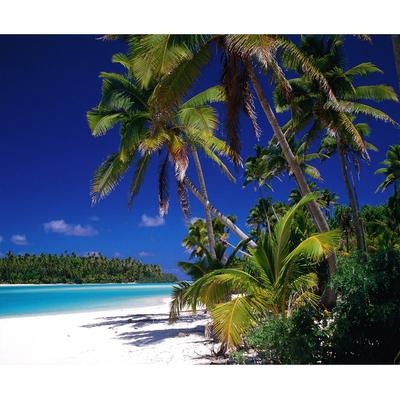 تابلو  بوم طرح ساحل کد Best Nature 69-N