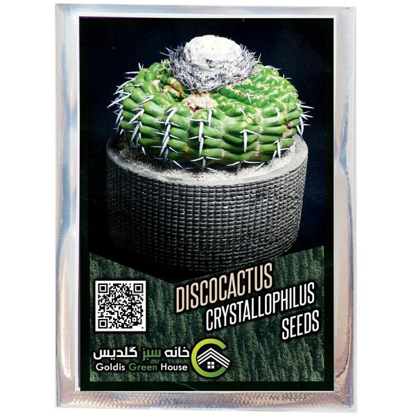 بذر دیسکو کاکتوس کریستالوفیلوس خانه سبز گلدیس کد 35