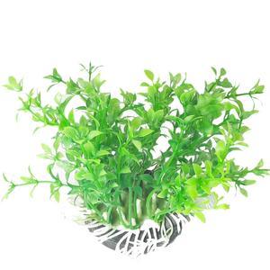 گیاه تزئینی آکواریوم کد Ma0025