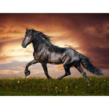 تابلو شاسی طرح اسب