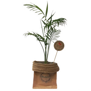 گیاه طبیعی شامادورا کد P.A.013