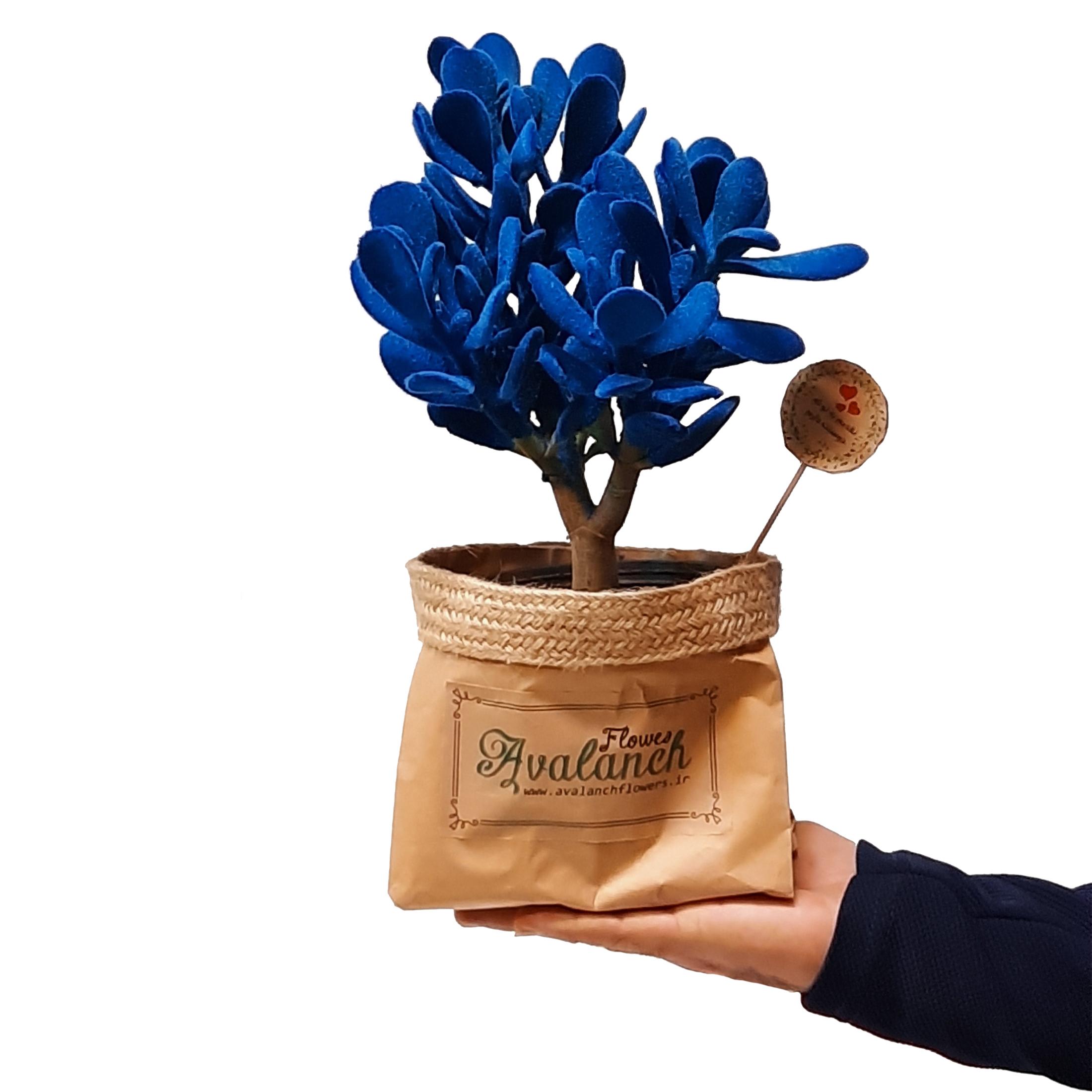 گیاه طبیعی کراسولا آبی کد P.A.022 main 1 1