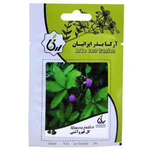 بذر گل قهر و آشتی آرکا بذر ایرانیان کد ARK-070