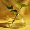 گلدان مدل ونوس کد V02 thumb 1