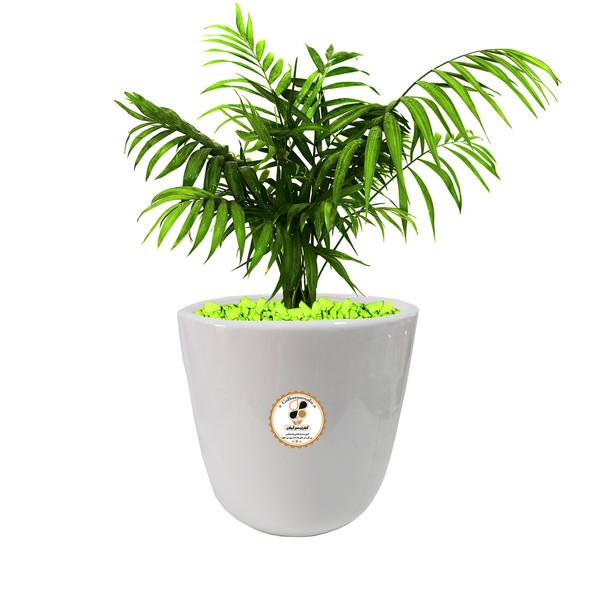 گیاه طبیعی شامادورا گلباران سبز گیلان مدل GN13-22L