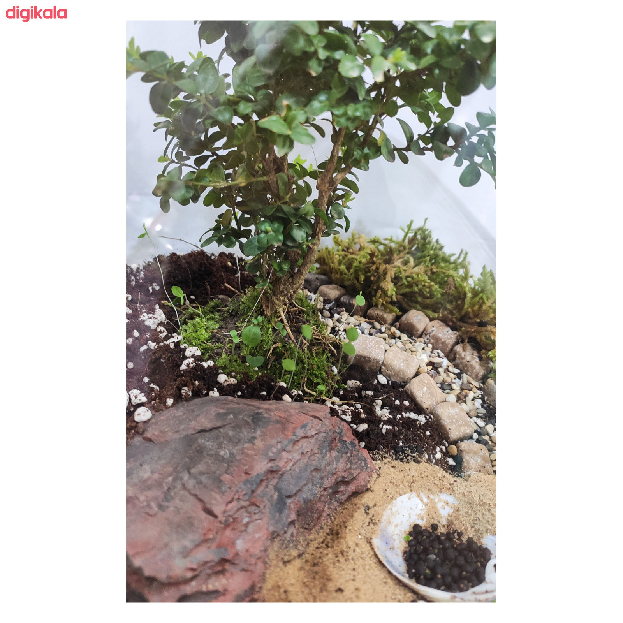 تراریوم گیاه طبیعی کد Kore-sml28 main 1 4