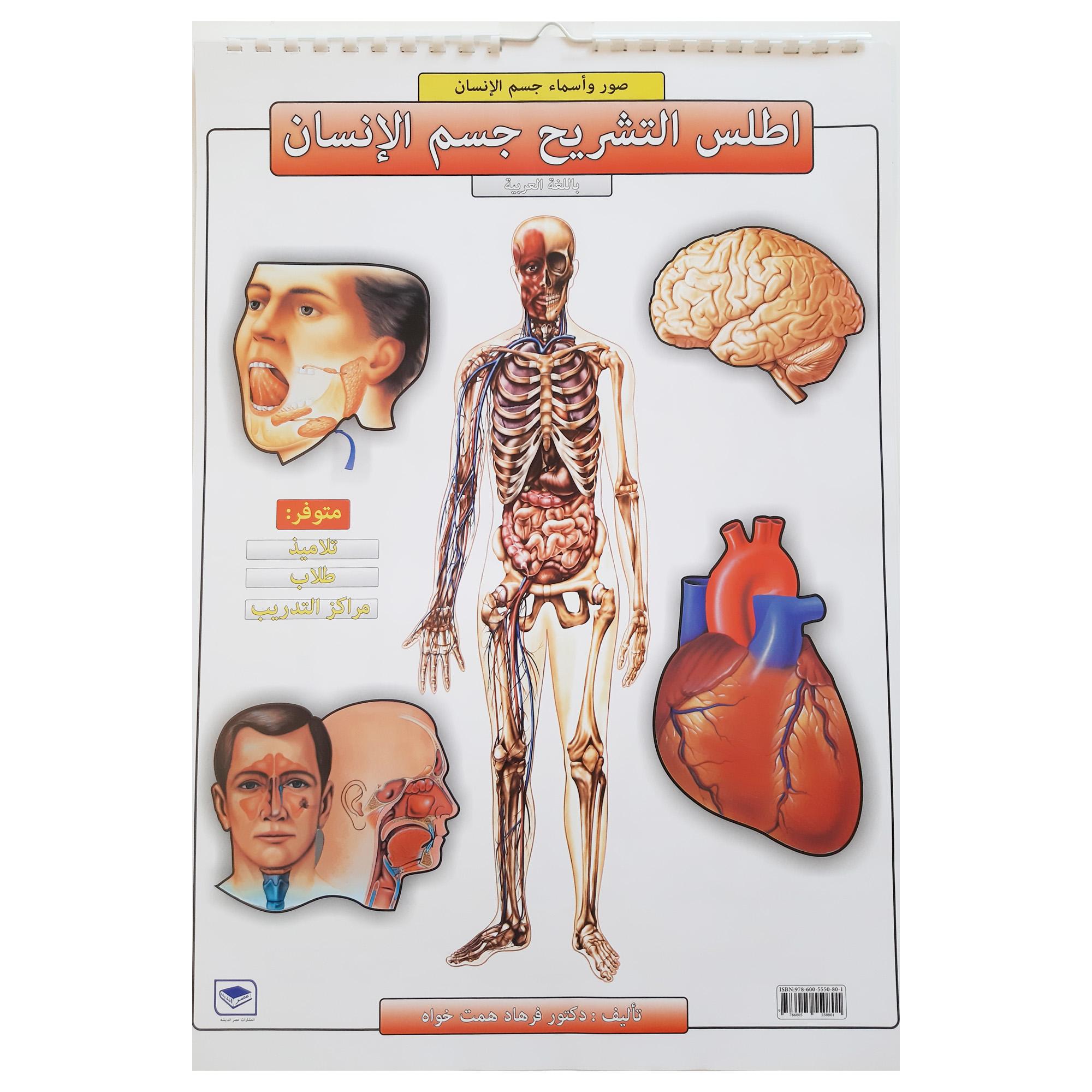 پوستر آموزشی انتشارات عصر اندیشه مدل اطلس آناتومی بدن انسان کد 15