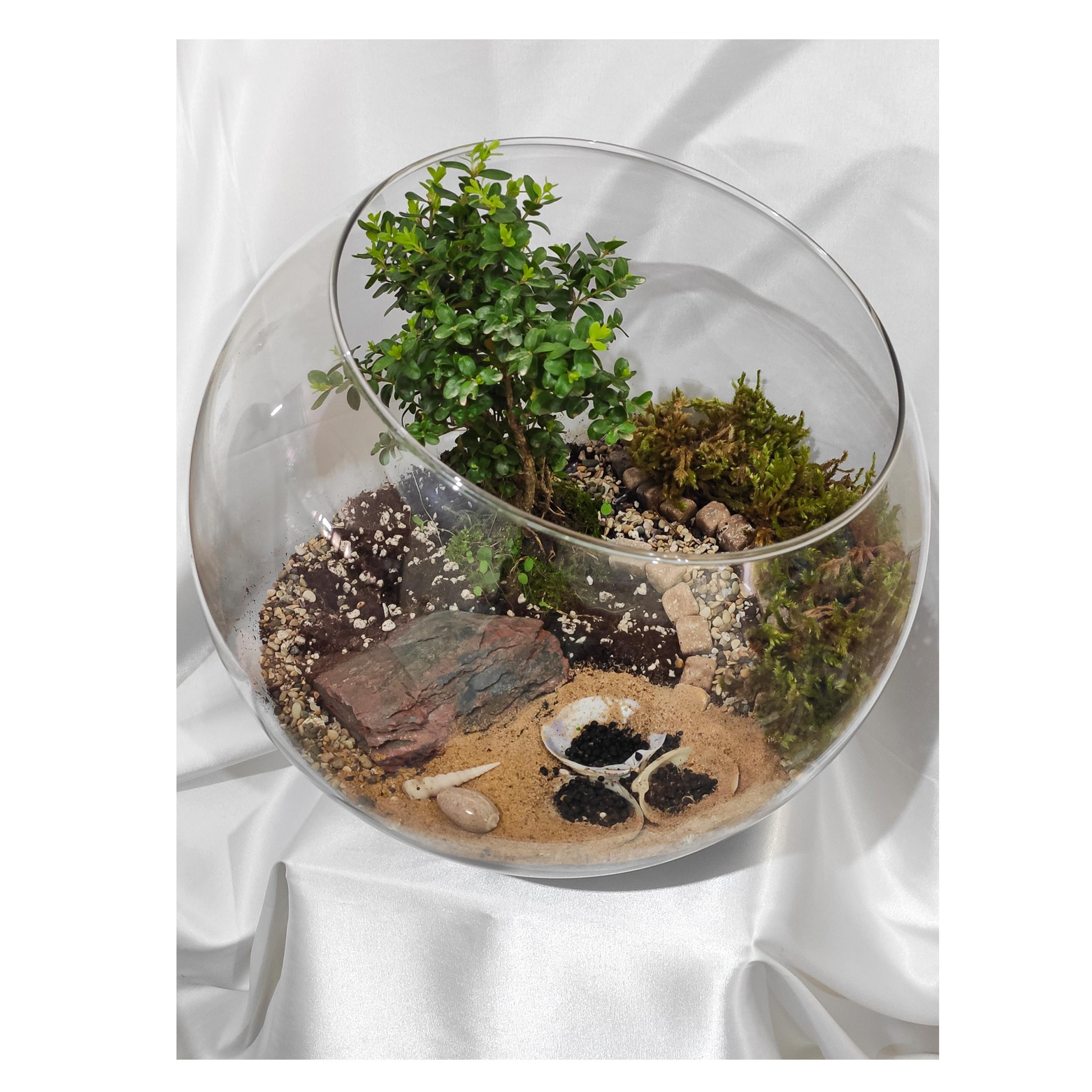 تراریوم گیاه طبیعی کد Kore-sml28 main 1 1