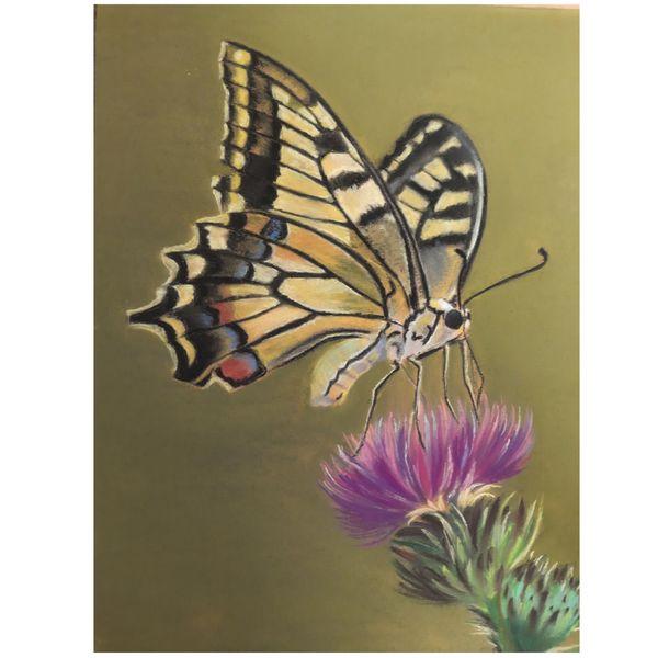 تابلو نقاشی پاستل طرح پروانه